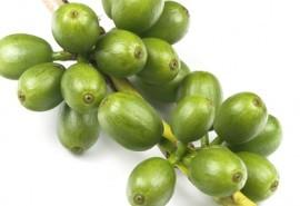 Зеленый кофе против лишнего веса
